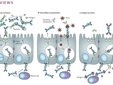 Boosting sIgA Mucosal Immunity against Virus Infections
