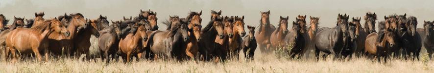 Natural Horsemanship, Wild Horses, Horsemanship Trainers, Natural Horsemanship Trainers California, Wild to Willing, Nicolette Birnie