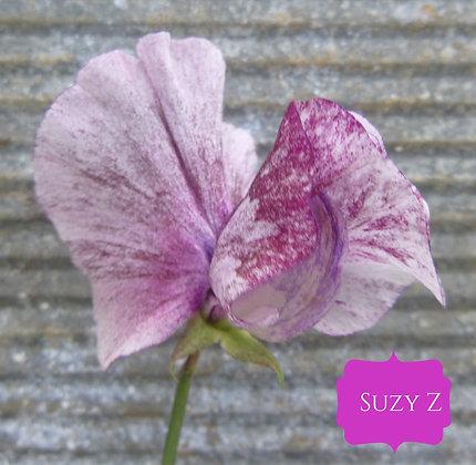 Suzy Z