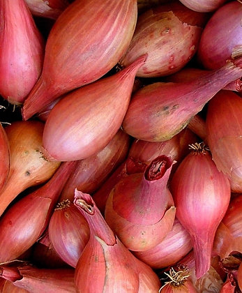 French Shallot Seeds