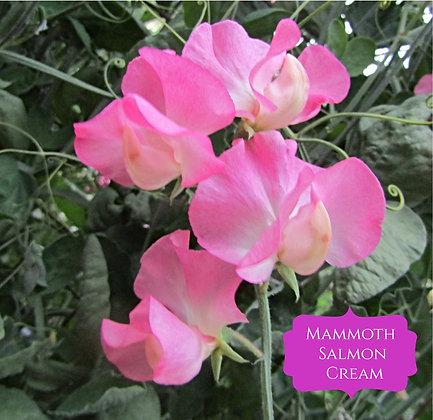 Mammoth Salmon Cream