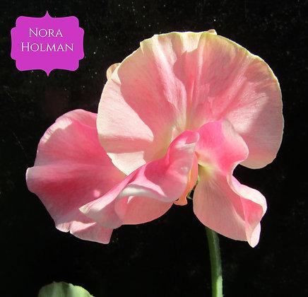 Nora Holman