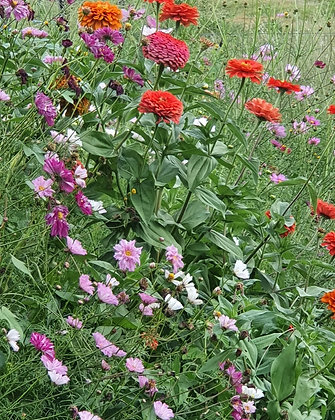 Summer Breeze Seed Mix