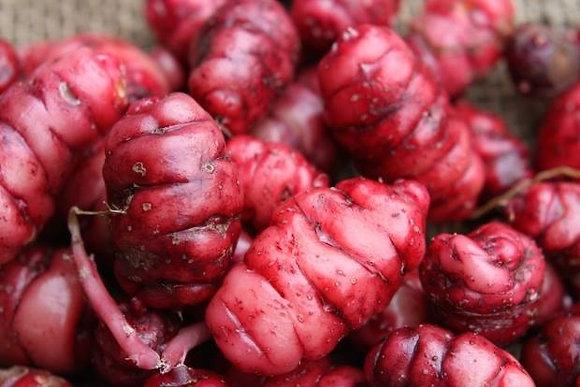 New Zealand Yam - Oxalis tuberosum