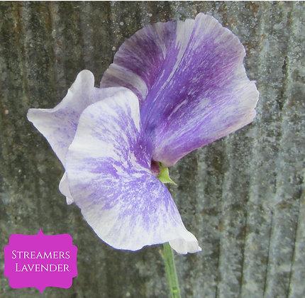Streamers Lavender