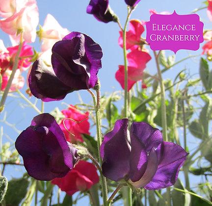 Elegance Cranberry