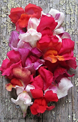 Snapdragon Mix - Antirrhinum majus