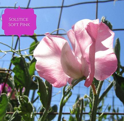 Solstice Soft Pink