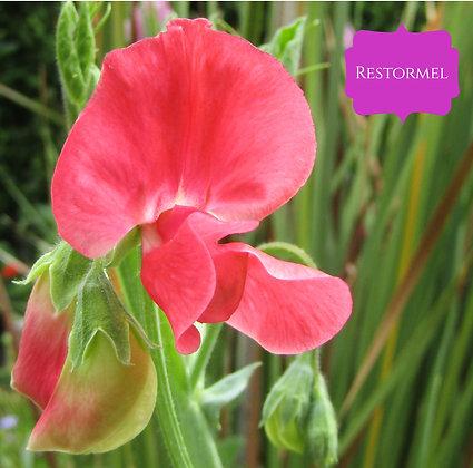 Restormel