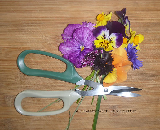 Flower Picking Scissors