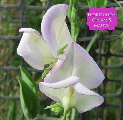 Floribunda - Cream & Mauve