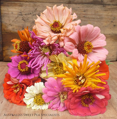 Zinnia Mixed Seeds