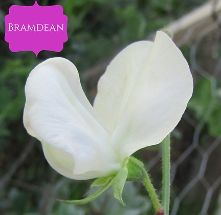 Bramdean