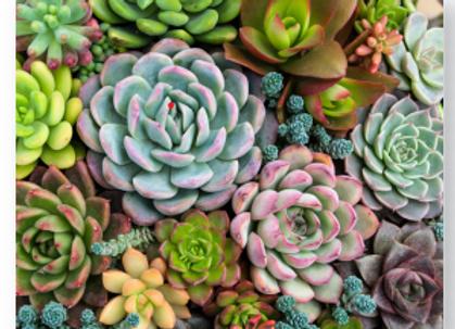 Paint by number 16X20 - Sensitive Succulents
