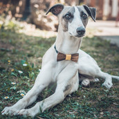 BOW TIES - FOR DOGS