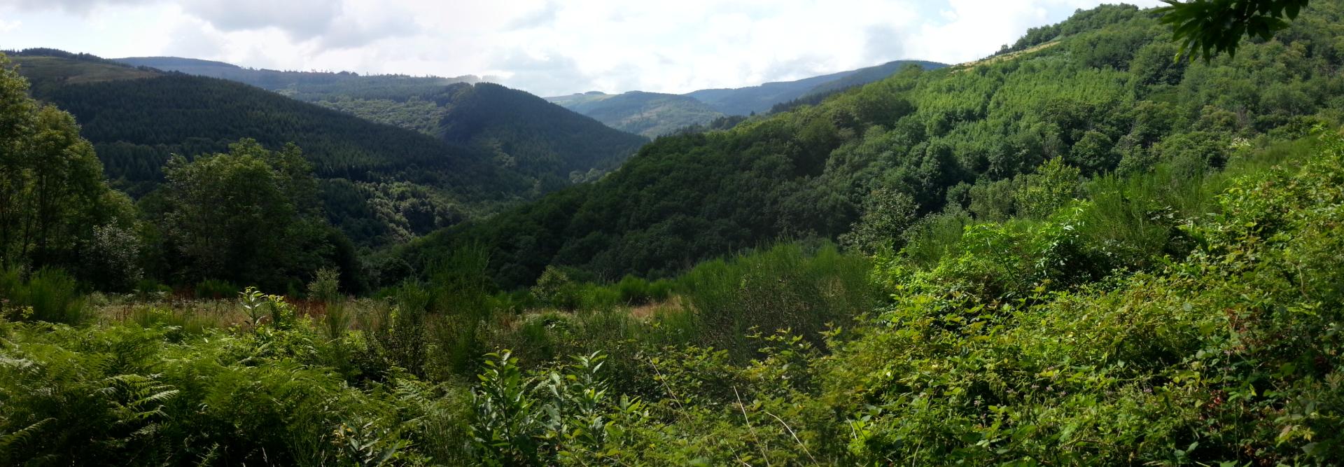 Mint Field View
