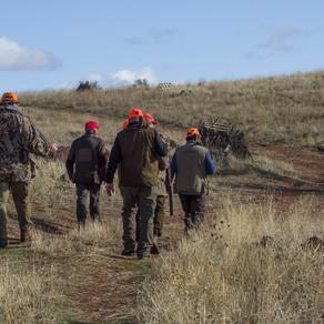 Licences de chasse : question écrite au Ministre Willy BORSUS