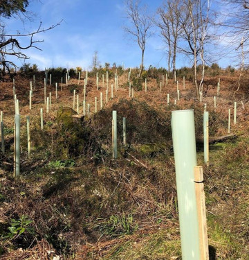 tree_planting_hampshire.JPG