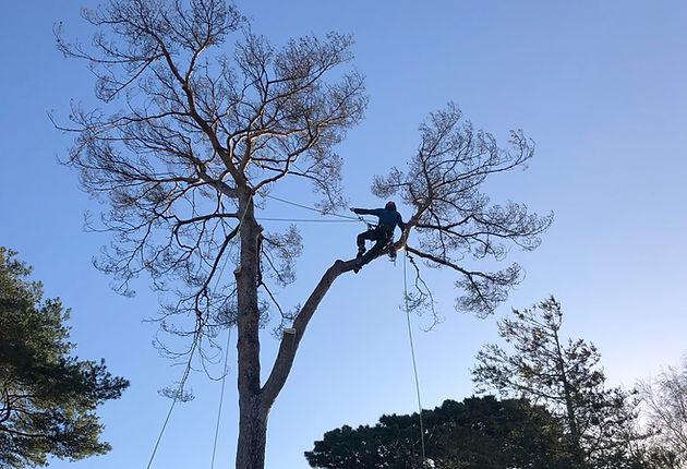 tree_work.JPG