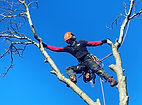 tree_reduction.JPG
