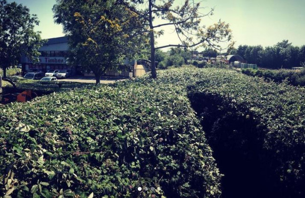 hedge_trimming_dorset.JPG