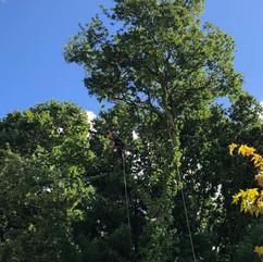 tree_pruning.JPG