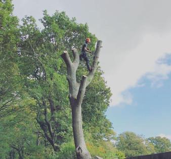 tree_removal.JPG