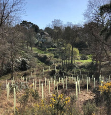 tree_planting_dorset.JPG