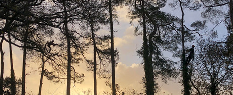 tree_surgeons_dorset.jpg