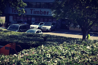 hedge_trimming_hampshire.JPG