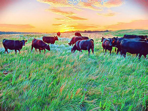 fall cows.jpg