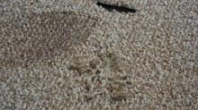 Carpet Repairing is an art & Science