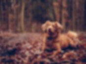 dog_sitting_foliage_118931_1600x1200.jpg