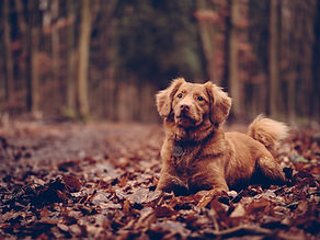 dog_sitting_foliage_118931_1600x1200.jpg