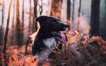 dog_dawn_frost_131675_3840x2400.jpg