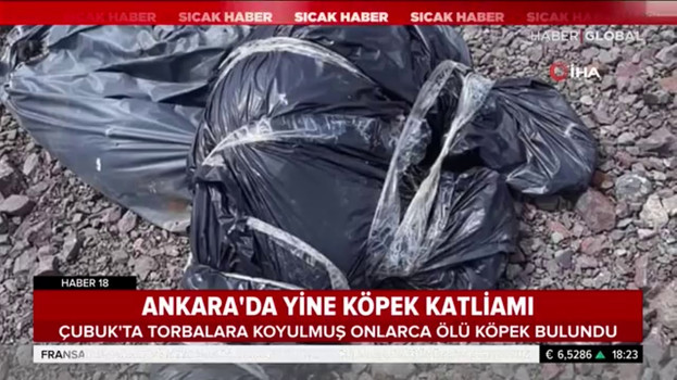 Ankara'da yine köpek katliamı