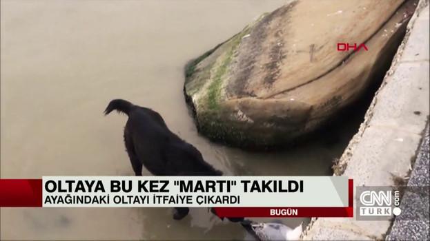 Silivri'de oltaya takılan martı kurtarıldı