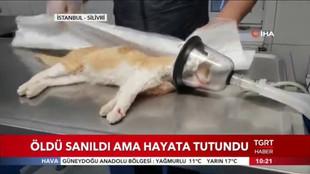 Öldü Sanılan Kedinin İnanılmaz Kurtuluşu