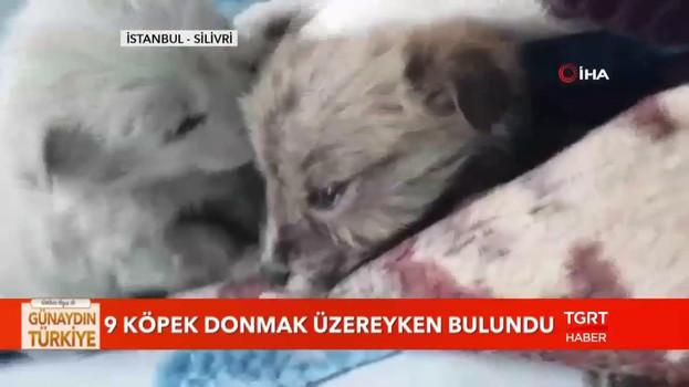 Yavru köpekler son anda kurtarıldı