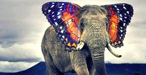 How Elephants Can Help You Be A More Joyful Mom.