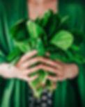 iStock-477423372_spinach_c_knape.jpg