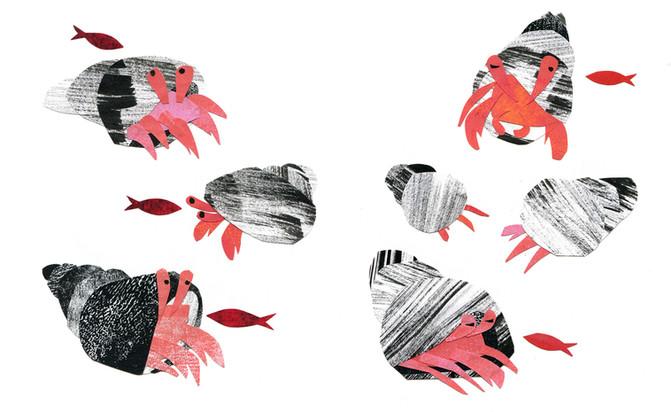 Hermit crabs