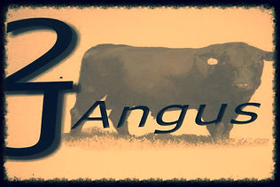 2J Angus Bull Sale Ogden Iowa