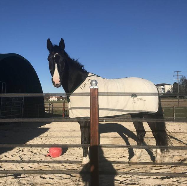 Des chevaux heureux avec Etienne Eco Paysages