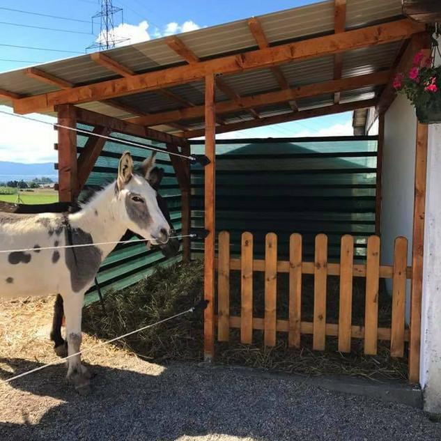 Cabane ventillée pour poneys ou ânes, de conception 100% Etienne