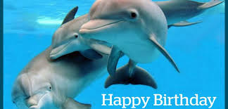 happy birthday with dolphins