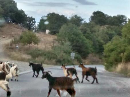 Summer traffic jams...