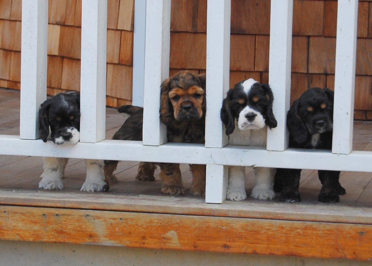 Maggie, Dublain, Rocco, Teaghan