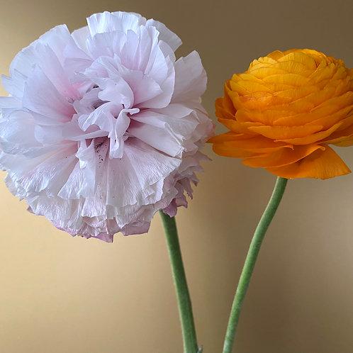 """Kopie von """"Buttercup in Pink and Orange on Gold"""" I"""