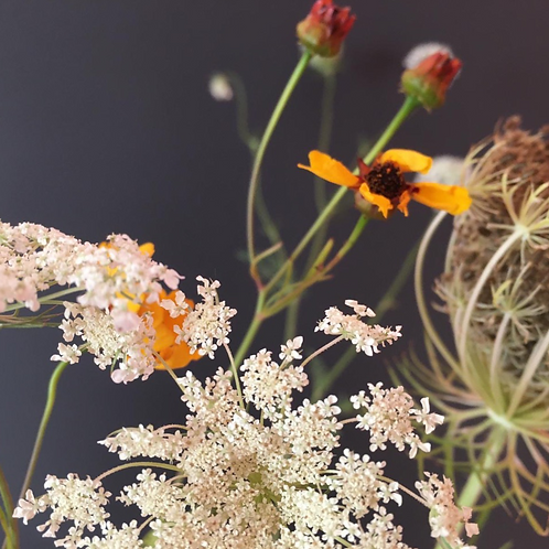 "Blumentapete ""Wild Carrot meets Moon Eye"""
